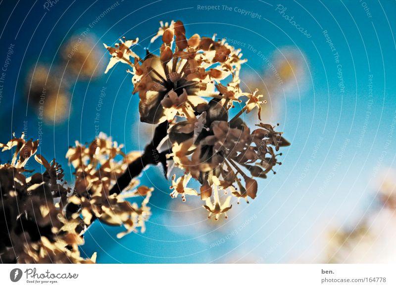 Farbbombe mehrfarbig Außenaufnahme Tag Licht Sonnenlicht Sonnenstrahlen Gegenlicht Starke Tiefenschärfe Natur Pflanze Baum Blüte Park leuchten Freundlichkeit