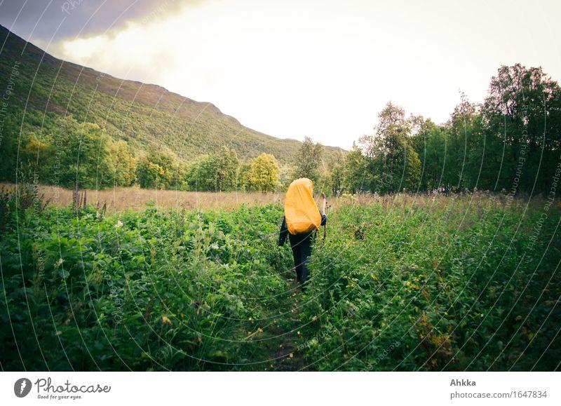 Wanderer in Orange Ferien & Urlaub & Reisen wandern 1 Mensch Landschaft Feld Wald Wege & Pfade Rucksack Rucksackurlaub wild grün orange Abenteuer Freiheit Natur