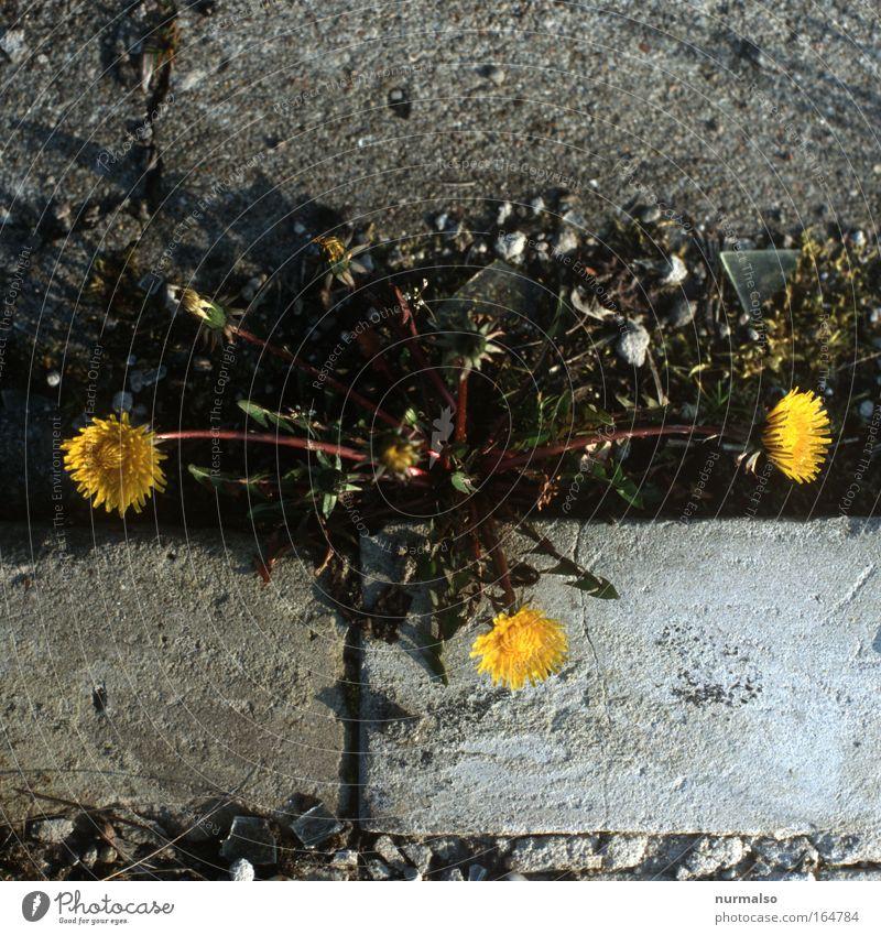 3 mal LöwenZ Natur Pflanze Blume Freude Tier gelb Erholung Gefühle Blüte Glück Lebensmittel Frühling lustig einfach unten Lächeln