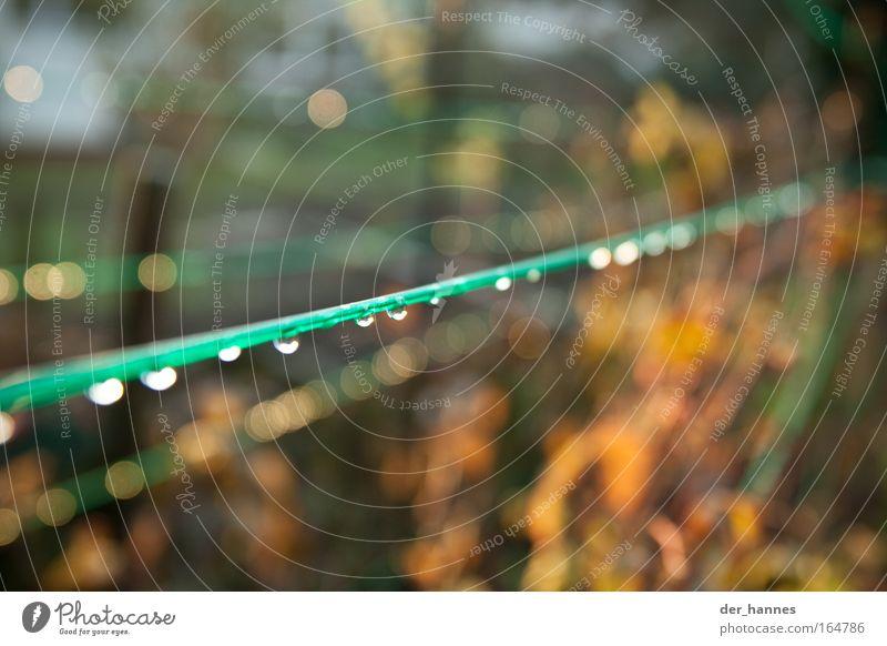Linien Natur grün Pflanze Herbst Gefühle Frühling Wärme Stimmung Umwelt Wassertropfen Sträucher Schönes Wetter Tiefenschärfe Lichtpunkt Nutzpflanze