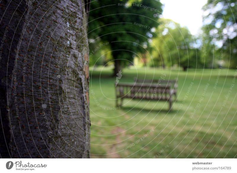 Stolz auf Holz Natur alt Baum Einsamkeit Wiese Gras Frühling Garten Park Landschaft Bank Vertrauen Stolz Willensstärke