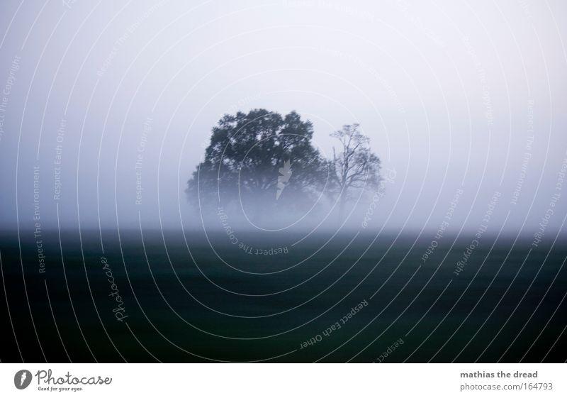 DIE NEBEL VON AVALON Natur Wasser Himmel Baum blau Pflanze kalt Herbst Wiese Holz grau Traurigkeit Landschaft Luft Feld Nebel