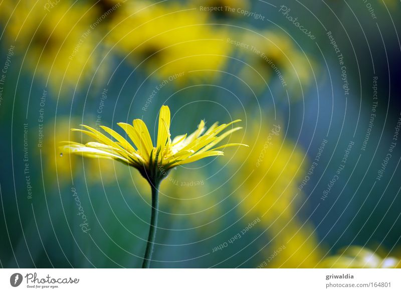 margi, single sucht ... Natur Blume grün blau Pflanze gelb Wiese Blüte Frühling Park Wassertropfen Idylle Blühend leuchten Duft Schönes Wetter