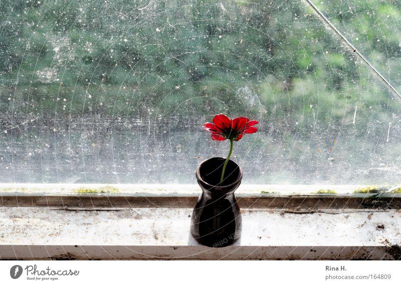 warten Farbfoto Nahaufnahme Textfreiraum unten Sonnenlicht Gegenlicht Blume Blüte Fenster braun grün rot Stimmung Vorfreude bescheiden Sehnsucht Erwartung