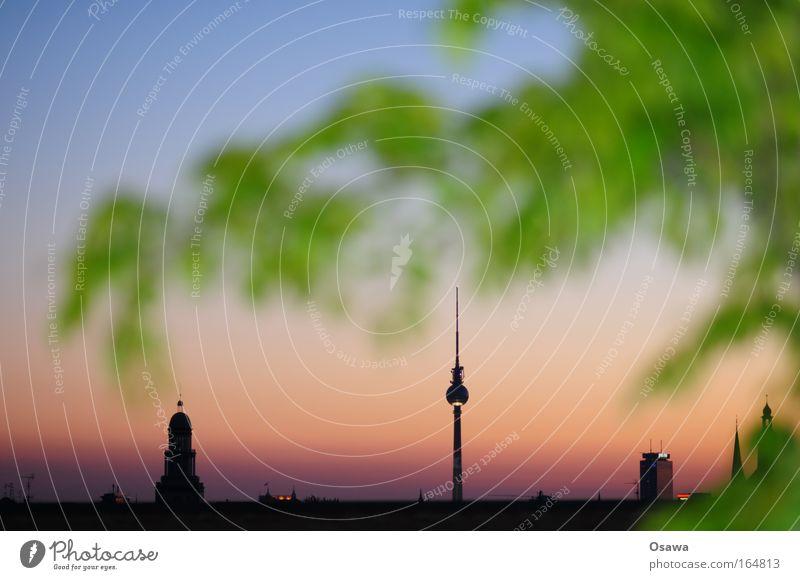 Türmchen Natur Baum grün blau Stadt Pflanze ruhig Blatt schwarz Berlin Gebäude Architektur Deutschland rosa gold Hochhaus