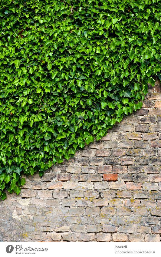 eRwachsen Natur alt grün Pflanze Blatt Wand Stein Mauer Fassade Wachstum Häusliches Leben Vergänglichkeit Backstein Vergangenheit zurück saftig