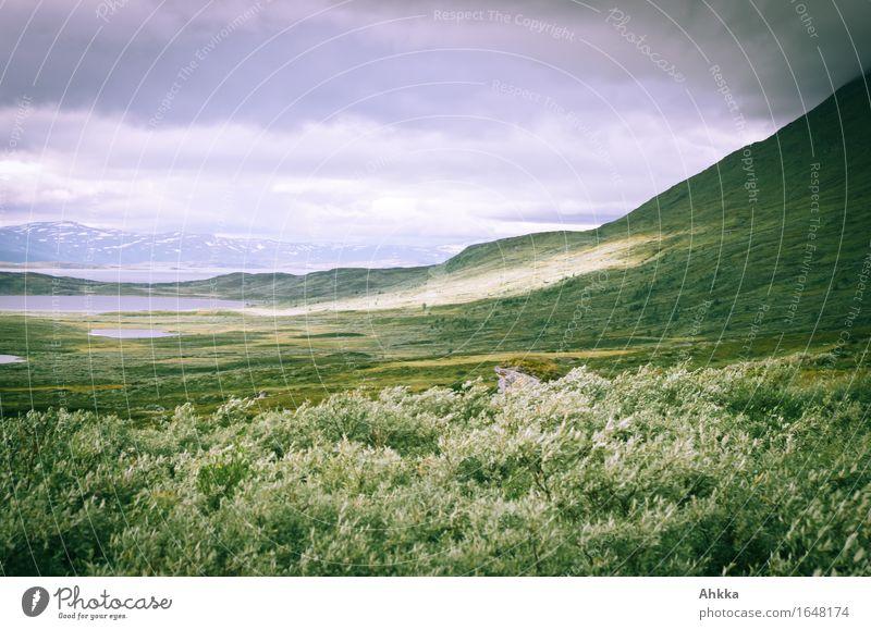 Grauweidensturm Wind Sträucher Berge u. Gebirge wild grau Wandel & Veränderung Ferne Farbfoto Außenaufnahme Menschenleer Licht Schatten Lichterscheinung