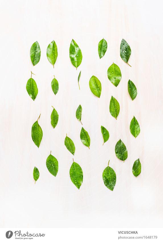 Grünen Blätter mit Wassertropfen auf weißem Holzuntergrund Stil Design Leben Sommer Umwelt Natur Klima Pflanze Baum Blatt Grünpflanze Zeichen Umweltschutz