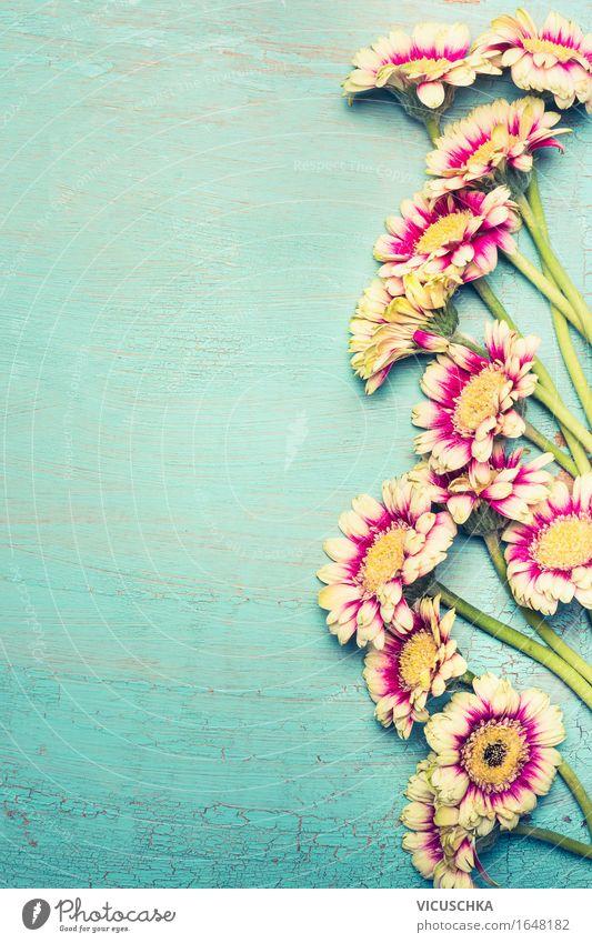 Blumenbündel auf türkisblauen Shabby Chic Hintergrund Natur Pflanze Sommer Erholung Blatt ruhig Freude Liebe Blüte Stil Glück Feste & Feiern rosa Design