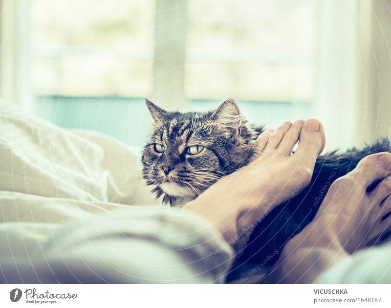 Katze liegt im Bett bei Füßen Lifestyle Design Freude Häusliches Leben Wohnung Schlafzimmer Mensch Fuß Tier Haustier Liebe Gefühle Stimmung Vertrauen Tierliebe