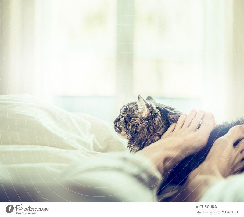 Gemeinsam wohlfühlen Katze Mensch Frau Sommer Erholung Tier Freude Fenster Erwachsene Liebe Lifestyle Fuß Zusammensein Häusliches Leben schlafen Bett