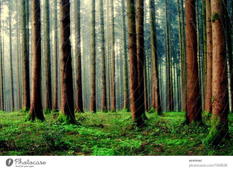 Regenwald Natur Baum grün ruhig Tier Wald Gras Frühling Landschaft Stimmung schlechtes Wetter