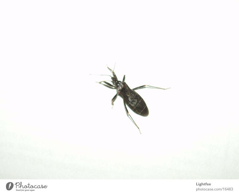 A Bugs Life Insekt schwarz Schädlinge weiß Wand Verkehr Käfer geblitztdings Natur Makroaufnahme Beine