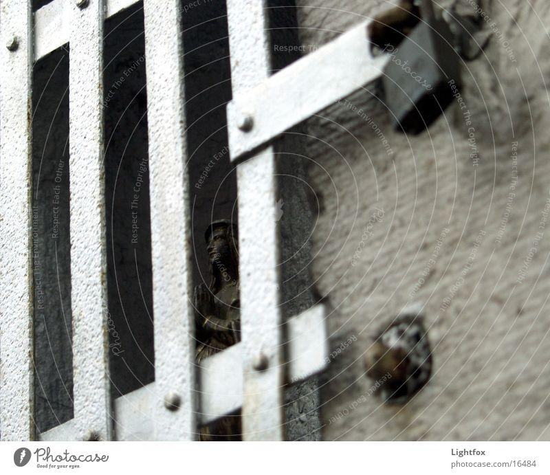 Lasst Maria frei!!! Religion & Glaube Metall geschlossen Burg oder Schloss heilig Eisen Gitter Ausstellung Niederlande Kloster Käfig Christentum Roermond