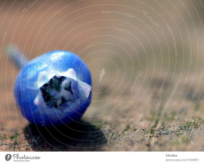 Abgefallen.......: Traubenhyazinthe Natur Blume blau Pflanze schwarz Frühling braun Umwelt Pollen Stempel Glocke verblüht Zwiebel Hyazinthe Frühblüher