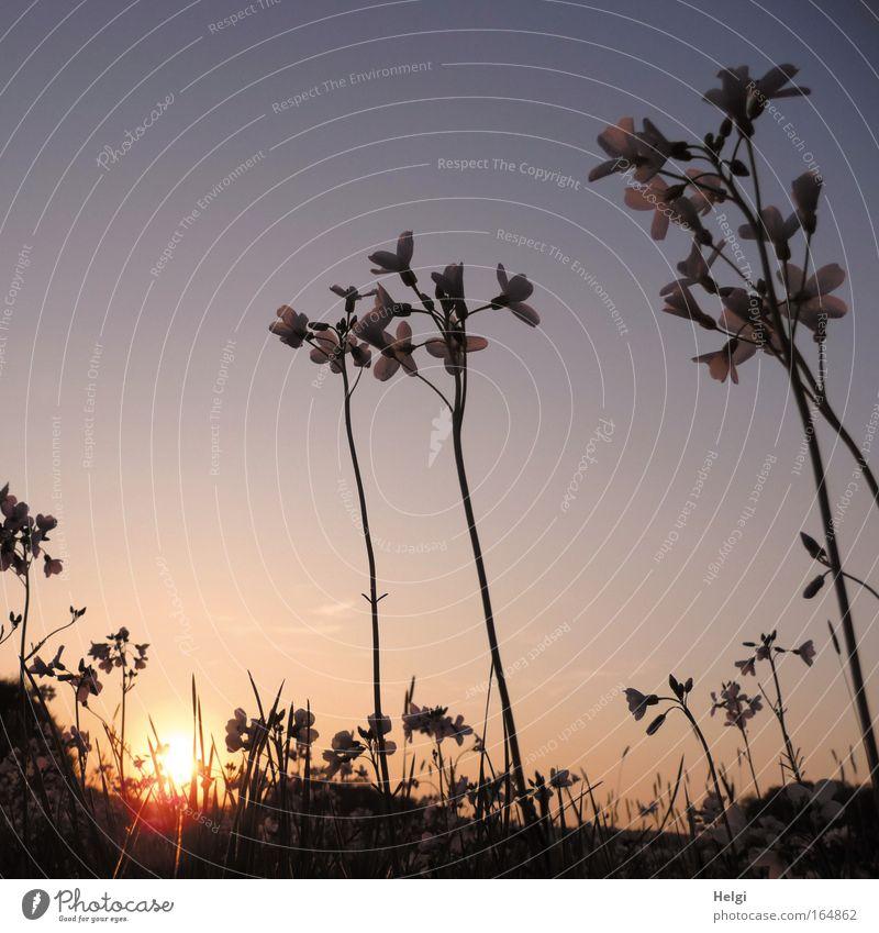 abends... Natur Himmel Sonne Blume blau Pflanze ruhig Blatt gelb Wiese Blüte Gras Frühling träumen Landschaft ästhetisch