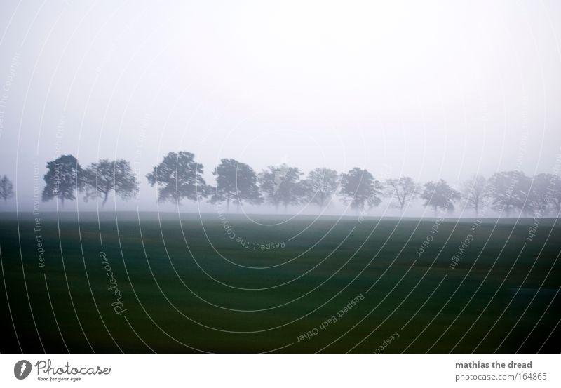 MORGENSTUND Natur Wasser schön Himmel Baum blau Pflanze Herbst Wiese Gras grau Traurigkeit Landschaft Luft Feld Nebel