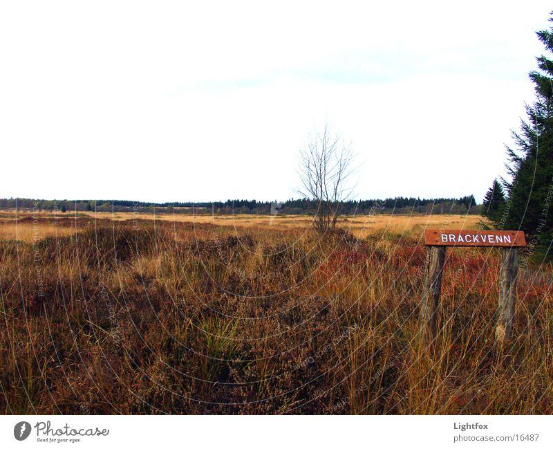 Das Brackvenn Natur Park Landschaft Klarheit Belgien Heide Eifel Hohes Venn