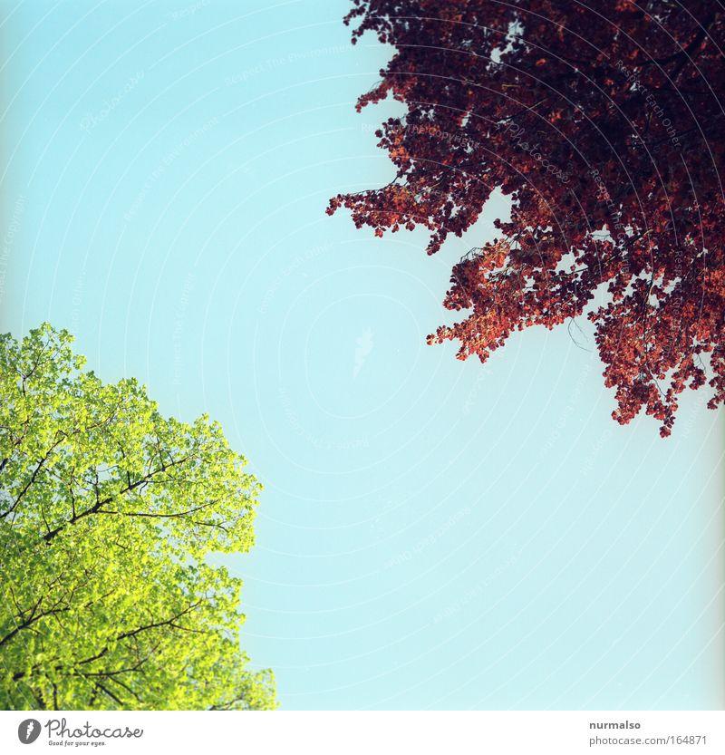 Baumerwachen Farbfoto Menschenleer Morgen Froschperspektive Expedition wandern Umwelt Natur Landschaft Pflanze Tier Luft Himmel Frühling Schönes Wetter Park
