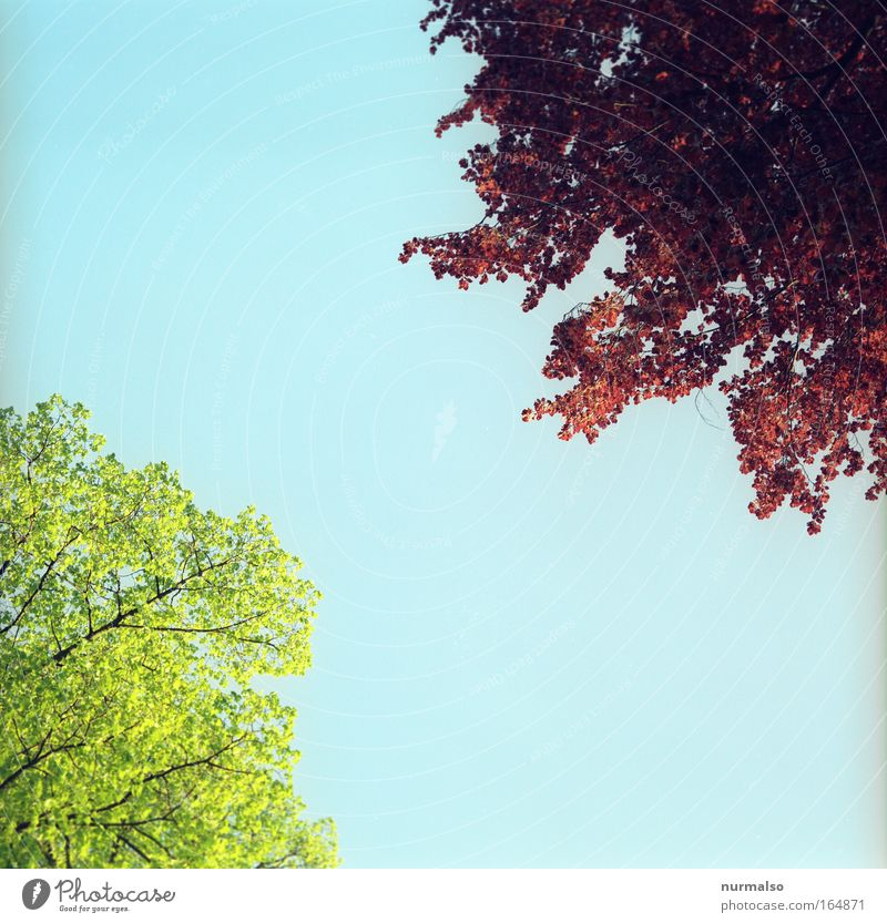 Baumerwachen Himmel Natur blau grün rot Pflanze Tier Umwelt Landschaft Frühling Glück Luft Park wild wandern