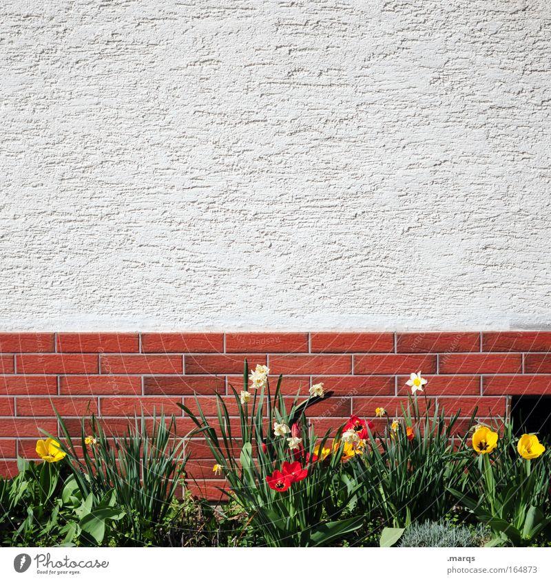 Vorgarten Farbfoto mehrfarbig Außenaufnahme Textfreiraum oben Häusliches Leben Haus Garten Pflanze Frühling Blume Einfamilienhaus Mauer Wand Fassade Blühend