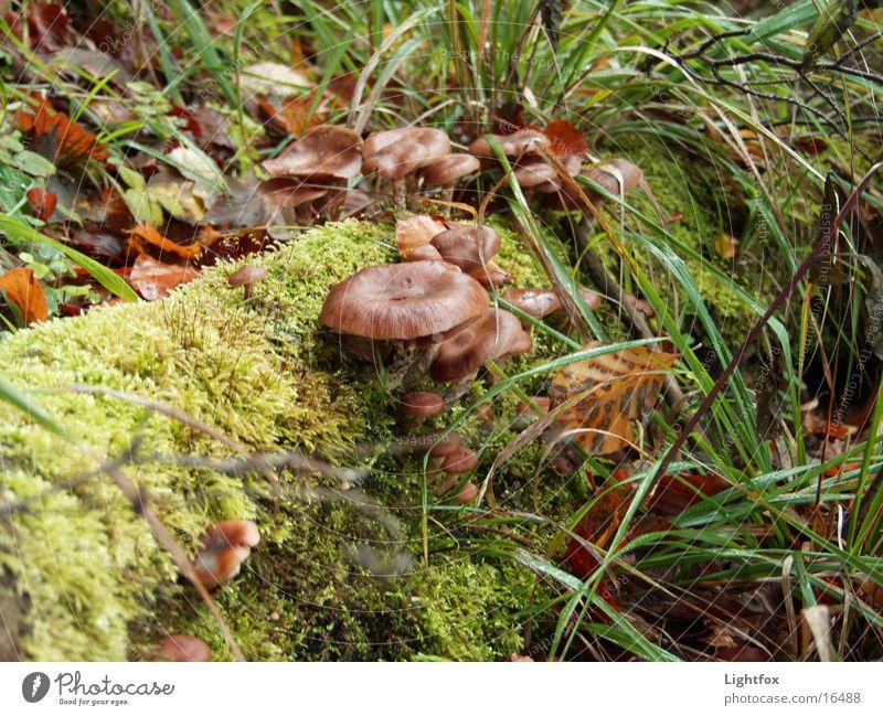Pilze am Stamm Natur Baum Umwelt Gras rein Sammlung Moos Jäger Eifel Rheinland-Pfalz