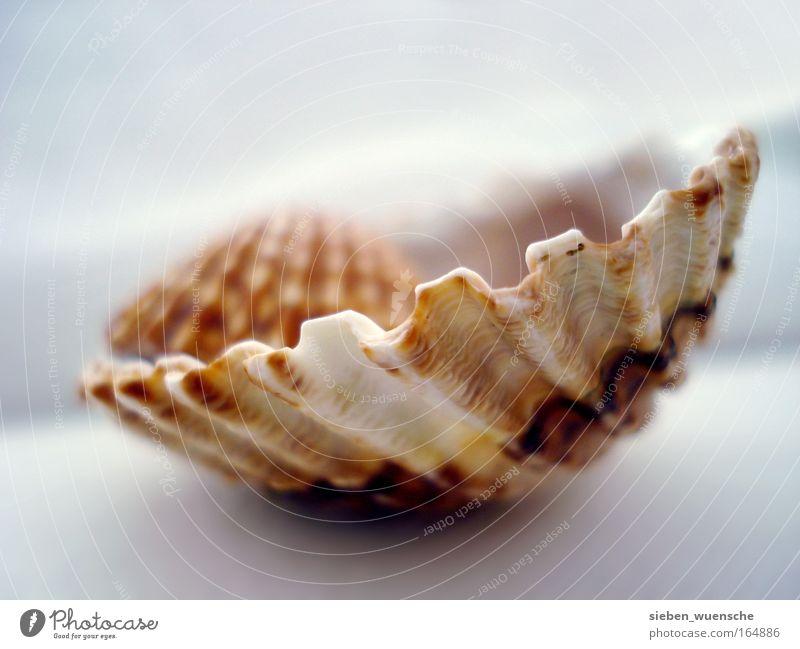 Nesthocker Umwelt Natur Muschel Muschelschale Muschelform Farbfoto Innenaufnahme Detailaufnahme Makroaufnahme Tag Starke Tiefenschärfe Zentralperspektive