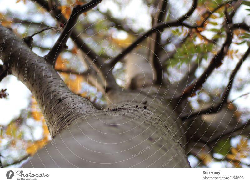 Krone Natur blau weiß grün Baum Pflanze Sommer Blatt Wald Ferne gelb Umwelt Herbst oben braun gold