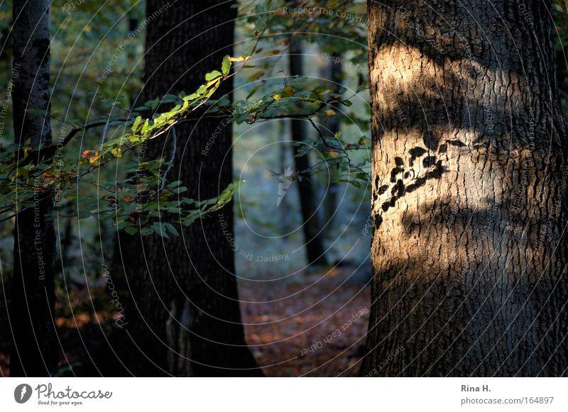 Lichterwald Natur grün Baum Erholung Landschaft Blatt Wald Umwelt Gefühle Glück braun Stimmung Zufriedenheit leuchten Romantik Hoffnung