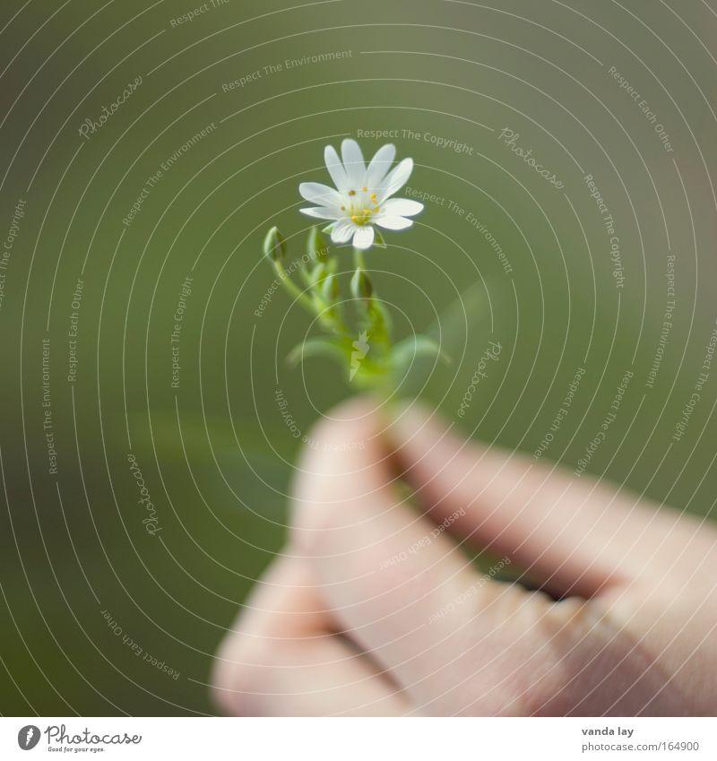 Für Dich! Natur Hand grün weiß Pflanze Blume Umwelt Gefühle Blüte Geburtstag Wunsch Schutz rein Freundlichkeit Jubiläum Blütenknospen