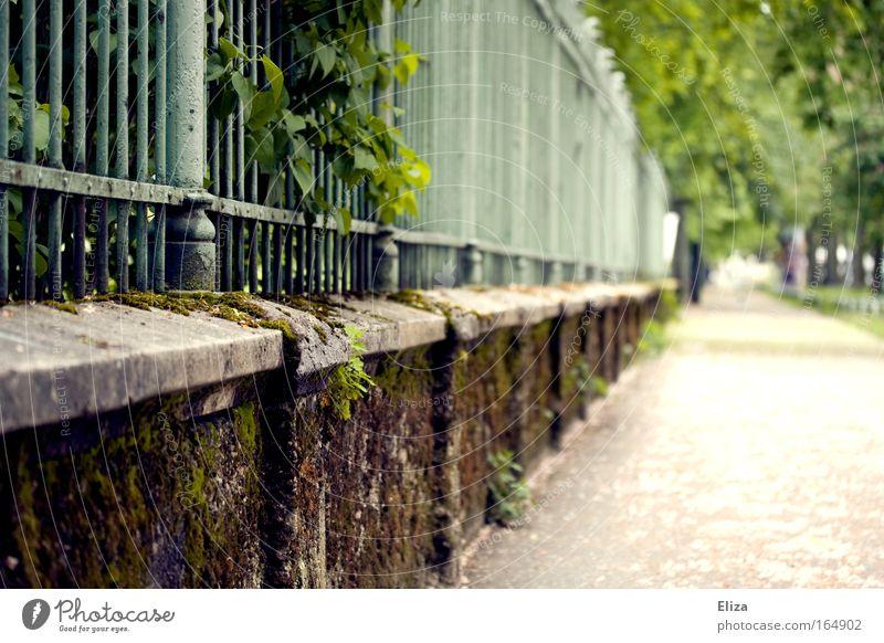 zugewachsen Natur grün Pflanze Sommer Blatt Frühling Mauer Wege & Pfade Landschaft Sträucher Ziel Idylle Zaun Moos bewachsen
