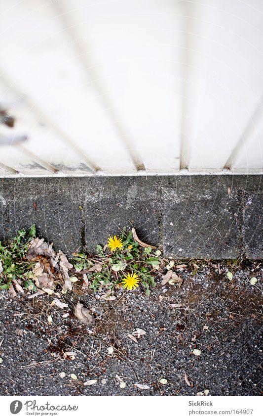 Zweisamkeit Blume Einsamkeit 2 Zusammensein Löwenzahn Garage