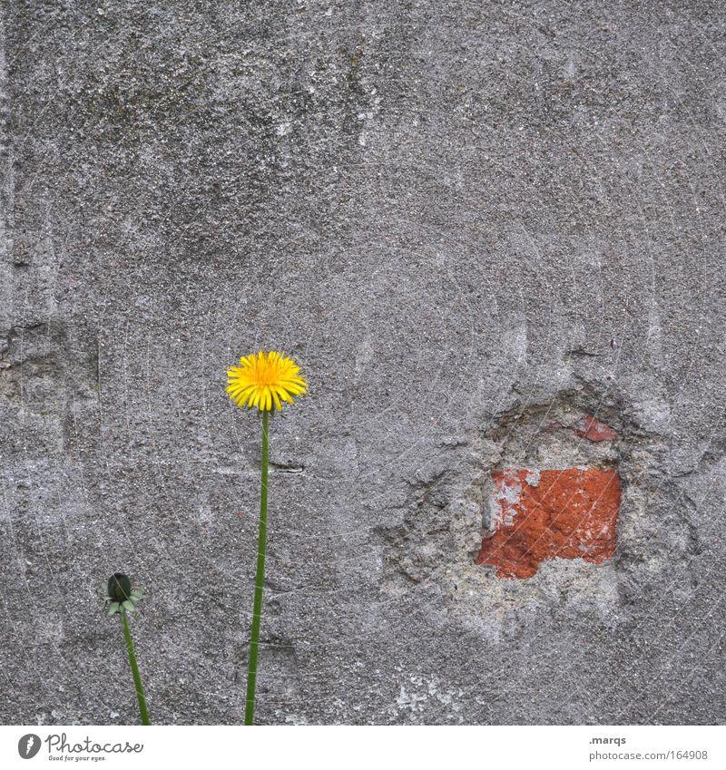 Mauerblümchen Farbfoto Außenaufnahme Textfreiraum oben Tag Freizeit & Hobby Erfolg Umwelt Natur Pflanze Blume Park Wand Blühend Wachstum authentisch trist gelb