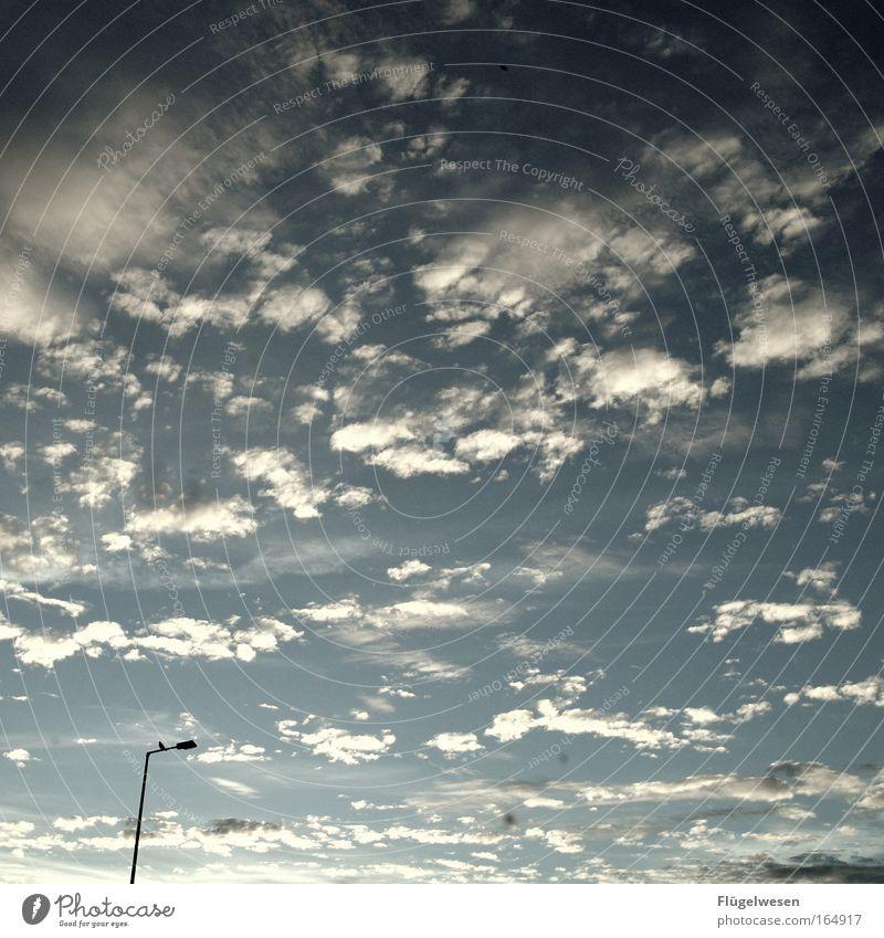 Laternendauersitzer Natur Himmel Wolken Tier Erholung Glück Landschaft Zufriedenheit Vogel fliegen bedrohlich Flügel beobachten Lebensfreude entdecken Verkehrswege