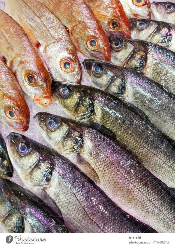Fischauswahl Gesunde Ernährung Essen Foodfotografie Lebensmittel Markt Fischereiwirtschaft Portugal Forelle Markthalle