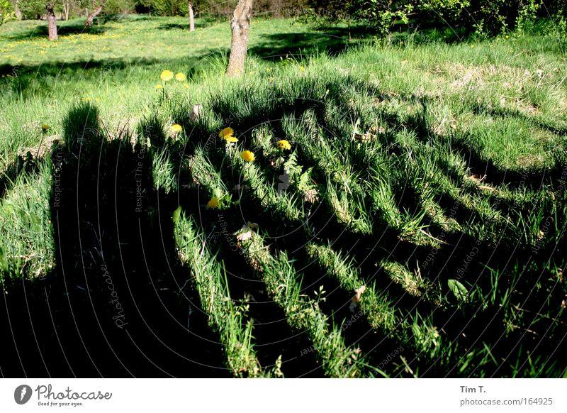 Gartentor Natur Blume grün Wiese Blüte Gras Frühling Park Tür Dorf Idylle Tor Schönes Wetter Grünpflanze