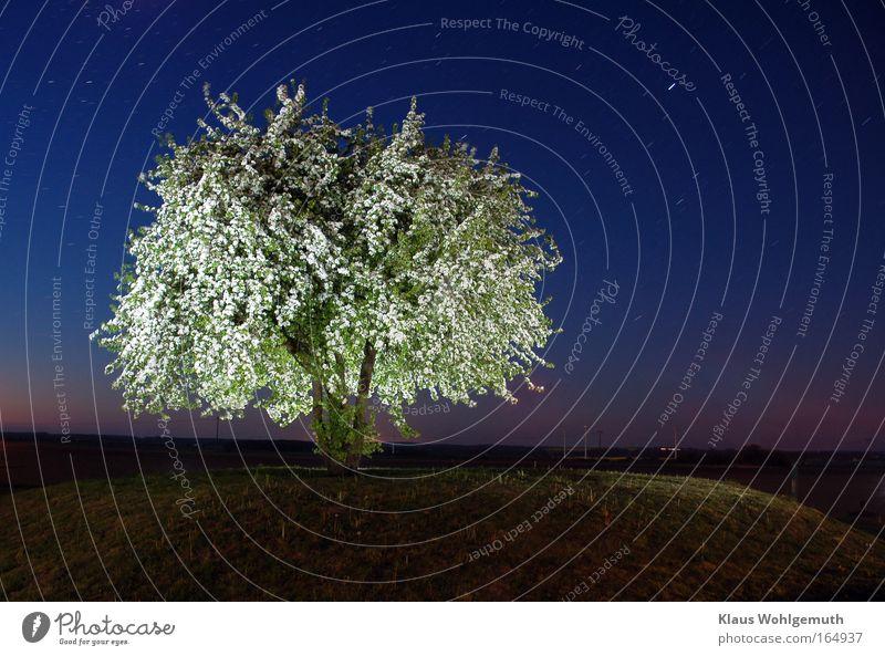 Blütenzauber Natur schön Baum ruhig Gefühle Frühling Stimmung Feld Stern Romantik geheimnisvoll Hügel Windstille Nachthimmel Sternenhimmel