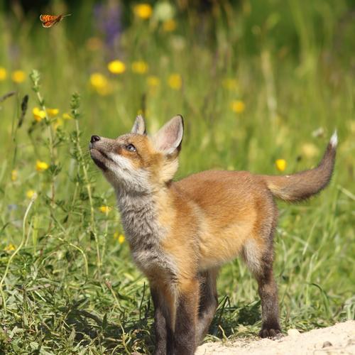 Kind Natur Jugendliche Sommer rot Tier Wald Tierjunges Umwelt natürlich Spielen klein Schule wild frei Baby