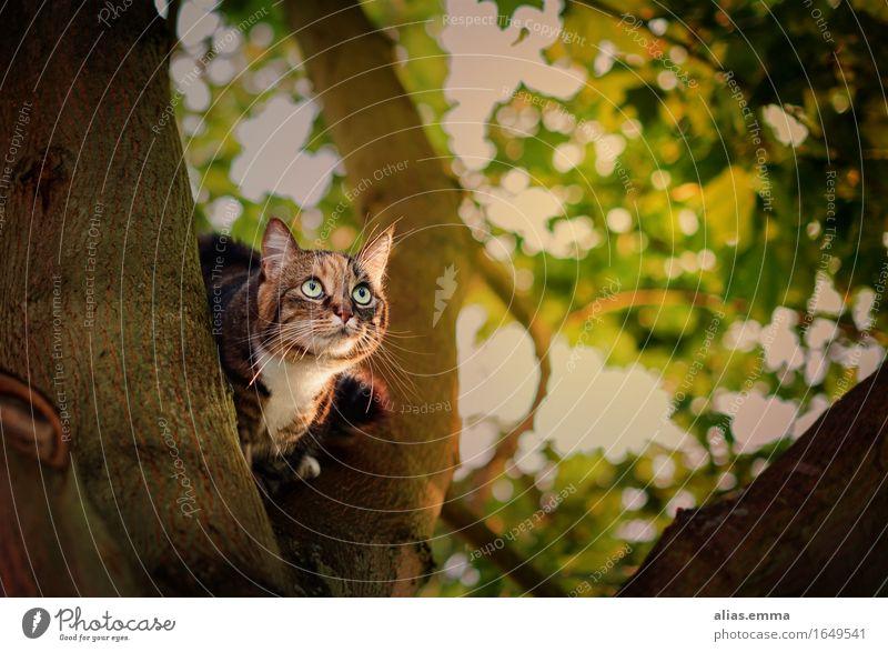 Hello?! Katze Haustier Blick Baum sitzen freilaufend Hauskatze Natur Außenaufnahme Katzenbaby niedlich beobachten Fell Tiger Auge Baumstamm Jäger Jagd