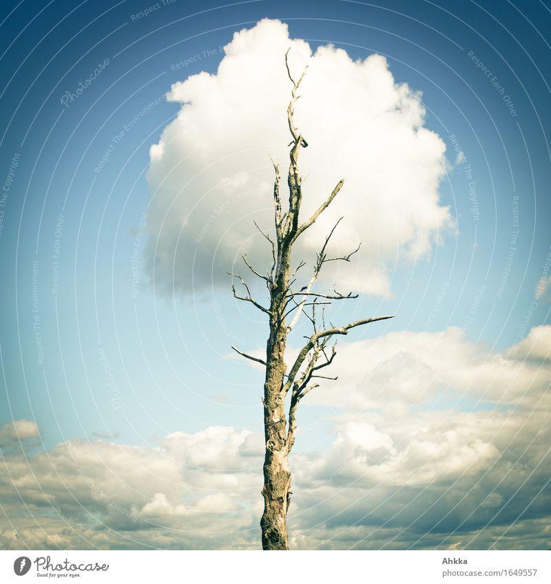 heil machen Natur blau weiß Baum Wolken Umwelt Tod Denken träumen wild Wachstum leuchten ästhetisch Kreativität fantastisch Lebensfreude