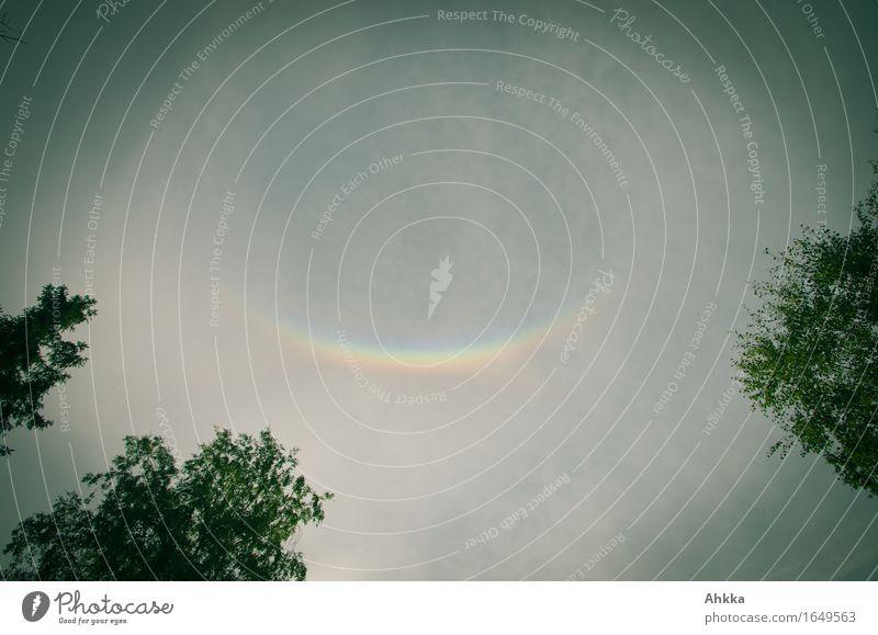 Lächeln Himmel Natur Baum Glück Zufriedenheit Fröhlichkeit Perspektive Lächeln Lebensfreude Zeichen Regenbogen