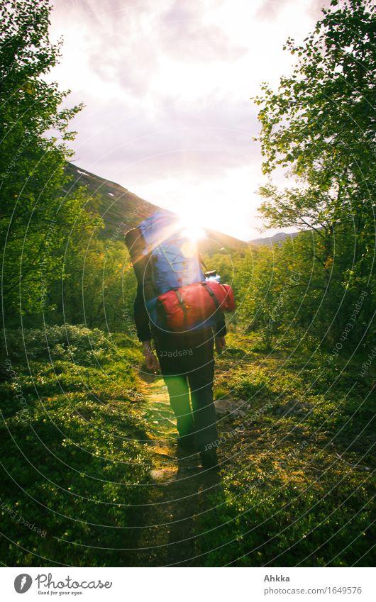 Into the Wild Ferien & Urlaub & Reisen Abenteuer Freiheit Berge u. Gebirge wandern Mensch 1 Natur Sonne Wald Wege & Pfade laufen Euphorie Kraft Mut Tatkraft