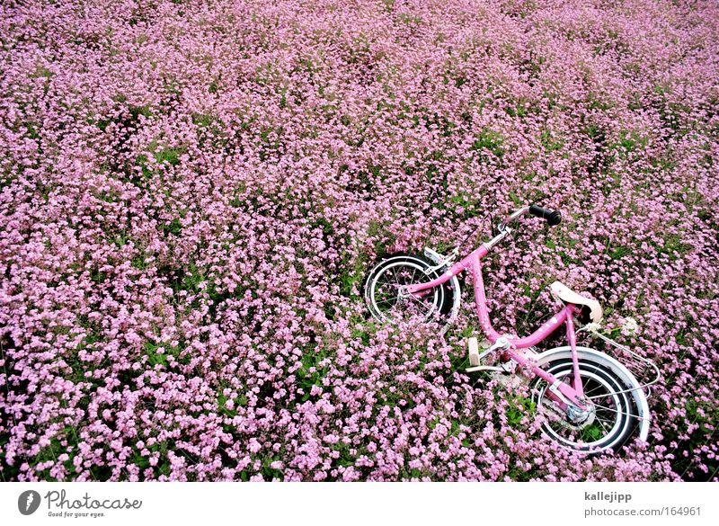 vergiss mein nicht Natur Sommer Pflanze Blume Umwelt Frühling Metall Park Fahrrad rosa Verkehr frisch Fröhlichkeit Freundlichkeit Kindergarten Beet