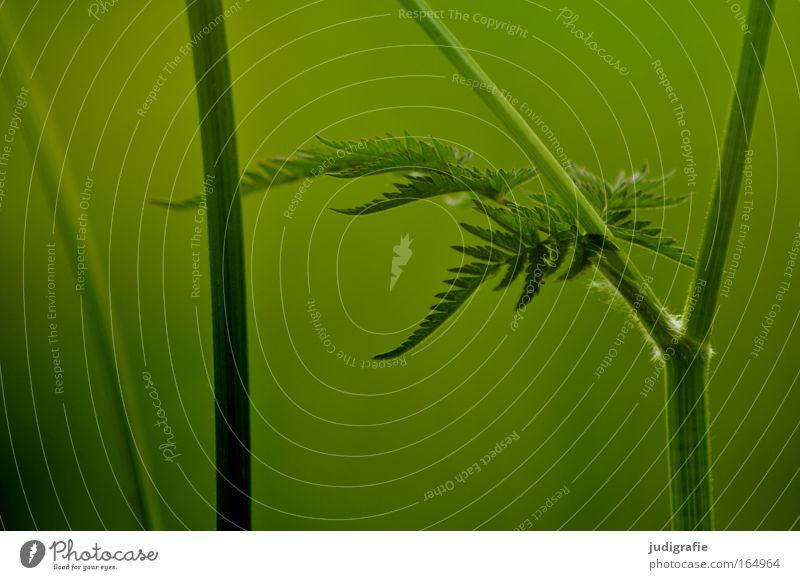 Wiese Natur schön grün Pflanze Sommer ruhig Farbe Leben elegant Umwelt frisch Wachstum einzigartig natürlich Idylle