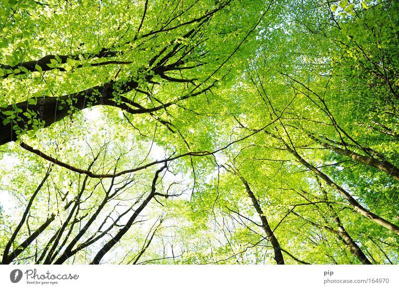 purwald Natur Tier Sonnenlicht Frühling Sommer Klima Schönes Wetter Baum Blatt Wald beobachten hell oben grün schwarz Optimismus Erholung Hoffnung Idylle Ferne