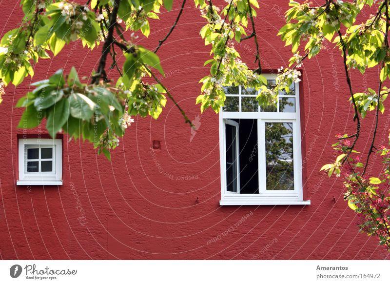 Schau doch mal raus Natur schön Sommer Freude Haus Erholung Wand Frühling Garten Glück Mauer Luft Zufriedenheit Wohnung Wetter Klima