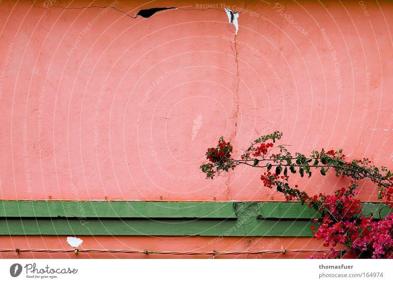 entspanntes Rosa grün schön Haus Erholung Wand Mauer Stein Traurigkeit Gebäude Stimmung rosa Freizeit & Hobby Fassade Europa Wandel & Veränderung Romantik