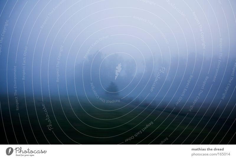 DIE NEBEL VON AVALON II Farbfoto Gedeckte Farben Außenaufnahme Textfreiraum oben Morgen Morgendämmerung Licht Schatten Kontrast Silhouette Lichterscheinung