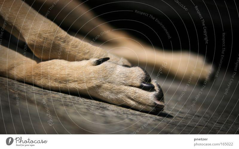 Pfote Natur Tier Hund Stein Beine braun Erde liegen Müdigkeit Terrasse Haustier Krallen faulenzen