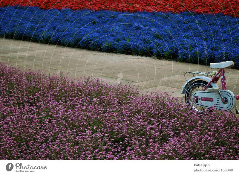 kinder-garten Menschenleer Garten Fahrrad Kindererziehung Kindergarten Fahrschule 3-8 Jahre Kindheit Umwelt Natur Pflanze Frühling Sommer Blume Park Verkehr